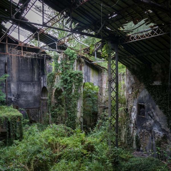Jungle-Factory-2