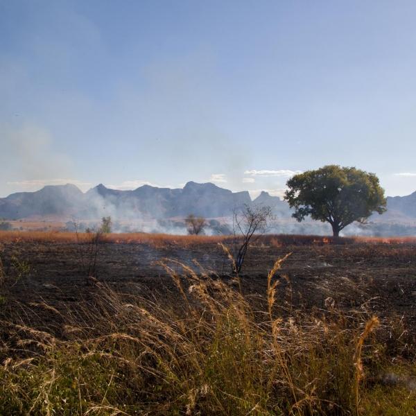Erosion de la biodiversité