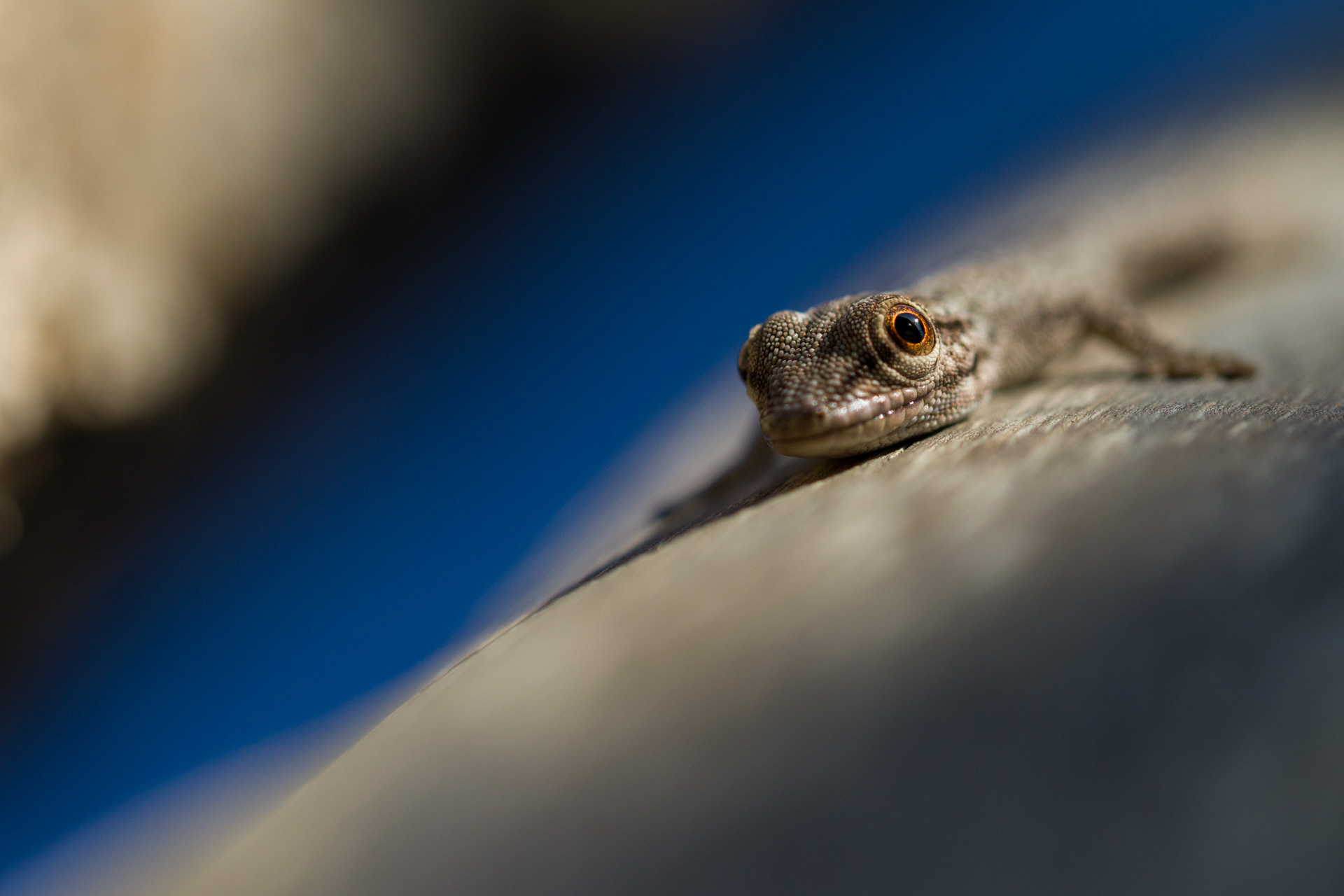 Abstract Gecko